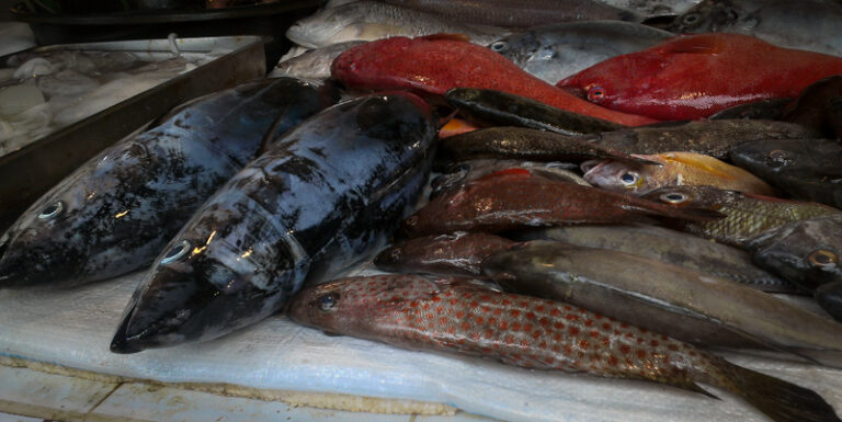 Fresh fish on the Talipapa market, Boracay, Filippines