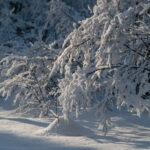 Сибирская зима, снег, лес