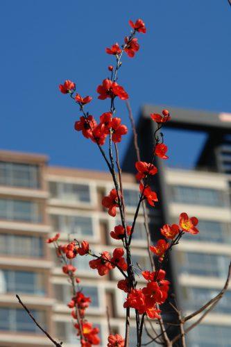 искусственные цветы на праздник весны в Китае